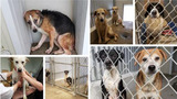 St. John shelter seizes more than 150 dogs, needs public assistance