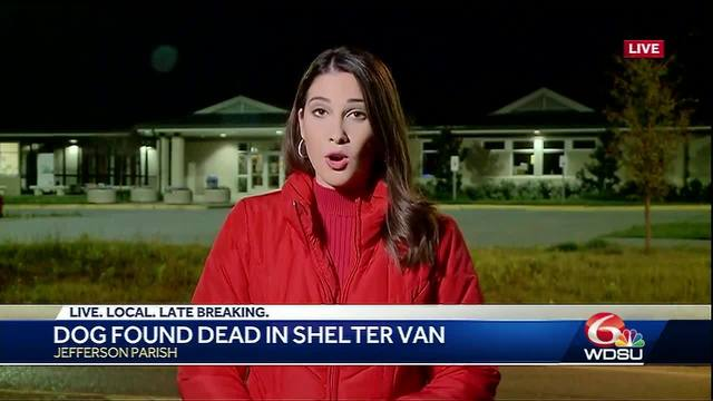 Dog found dead in Animal Shelter van