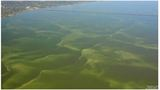 State Health Department warns about possible toxic algae bloom developing in Lake Pontchartrain