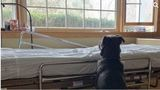 Dog adopted after photo of him waiting for dead owner goes viral